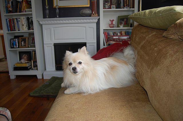 phx-dog-sitting-021
