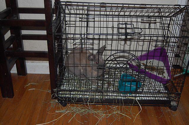rabbit-sitting-phx-027