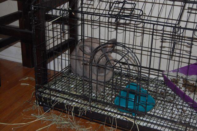 rabbit-sitting-phx-028