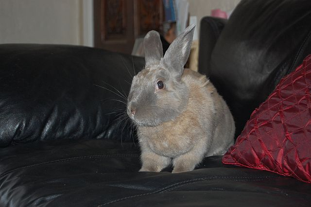rabbit-sitting-phx-055
