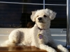 Pet Sitting in Phx with Heidi's Historic Home and Pet Care6