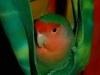 bird-sitting-phoenix