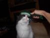 cat-sitting-phx-038