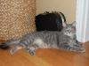 cat-sitting-phx-046