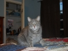 cat-sitting-phx-047