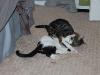 cat-sitting-phx