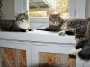 cat-sitting-phx3