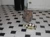 pet-sitting-phx-031