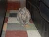 pet-sitting-phx-032