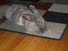 rabbit-sitting-phx-035