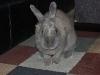 rabbit-sitting-phx-052