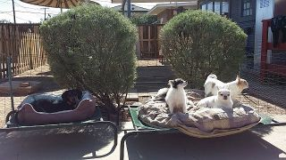 Boarding in Phx with Heidi's Historic Home & Pet Care48