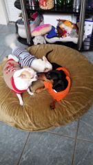 Doggie Day Care Heidis Historic Home & Pet Care14