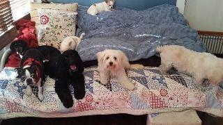 Doggie Day Care Heidis Historic Home & Pet Care6