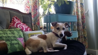 Doggie Day Care with Heidi's Historic Home & Pet Care 2016 (8)