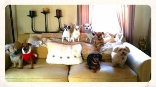 Heidi's Historic Home & Pet Care Doggie Day Care2