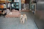 doggie-day-care-boarding-phoenix