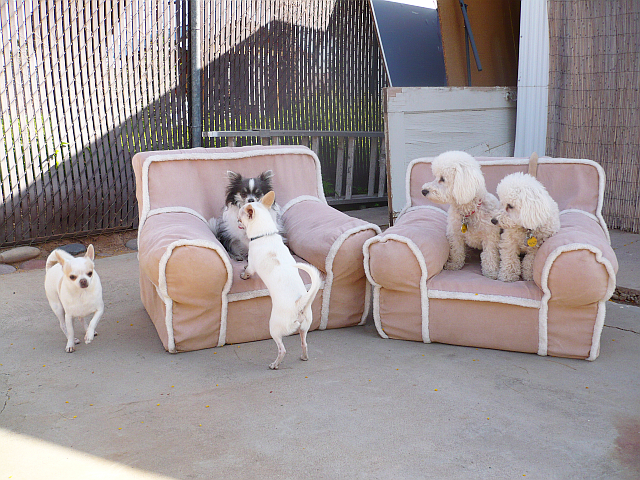 Cage-Free Doggie Day Care Phx