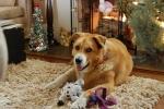 molly-christmas-2011-051