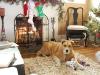 molly-christmas-2011-056