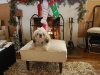 remis-first-christmas-2011-057