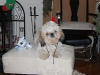 remis-first-christmas-2011-071