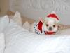 sonny-christmas-2011-099