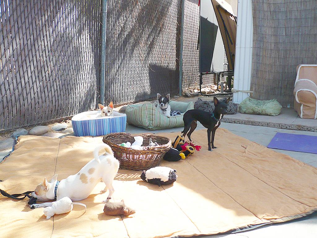 Phx Doggie Day Care, Phx Dog Boarding, Dog Boarding Phx Arizona