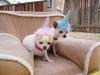 Phx Pet Parties, Phx Doggie Day Care, Doggie Play Dates Phx, Dog Boarding Phx5