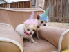 Phx Pet Parties, Phx Doggie Day Care, Doggie Play Dates Phx, Dog Boarding Phx