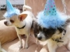 Phx Pet Parties, Phx Doggie Day Care, Doggie Play Dates Phx, Dog Boarding Phx0