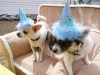 Phx Pet Parties, Phx Doggie Day Care, Doggie Play Dates Phx, Dog Boarding Phx5
